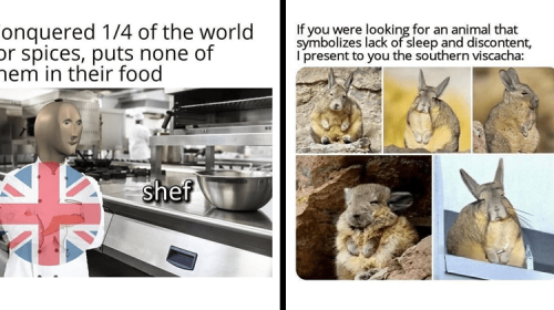 A Variety Of Memes For Equal Opportunity Humor Consumers
