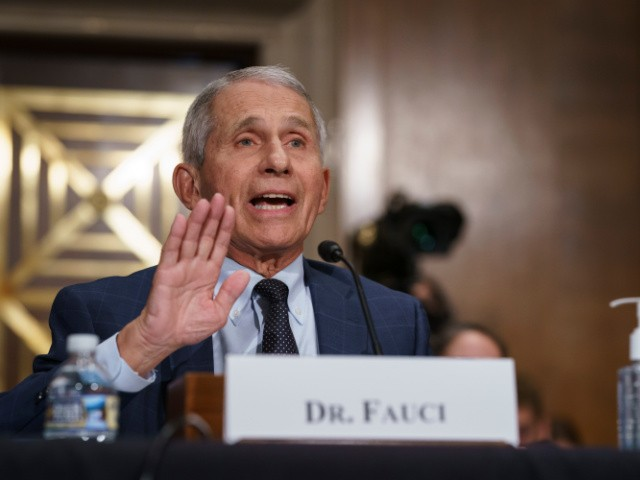 Rand Paul Lights Up Anthony Fauci: 'There's a Possibility We Are Suffering from His Poor Judgment'
